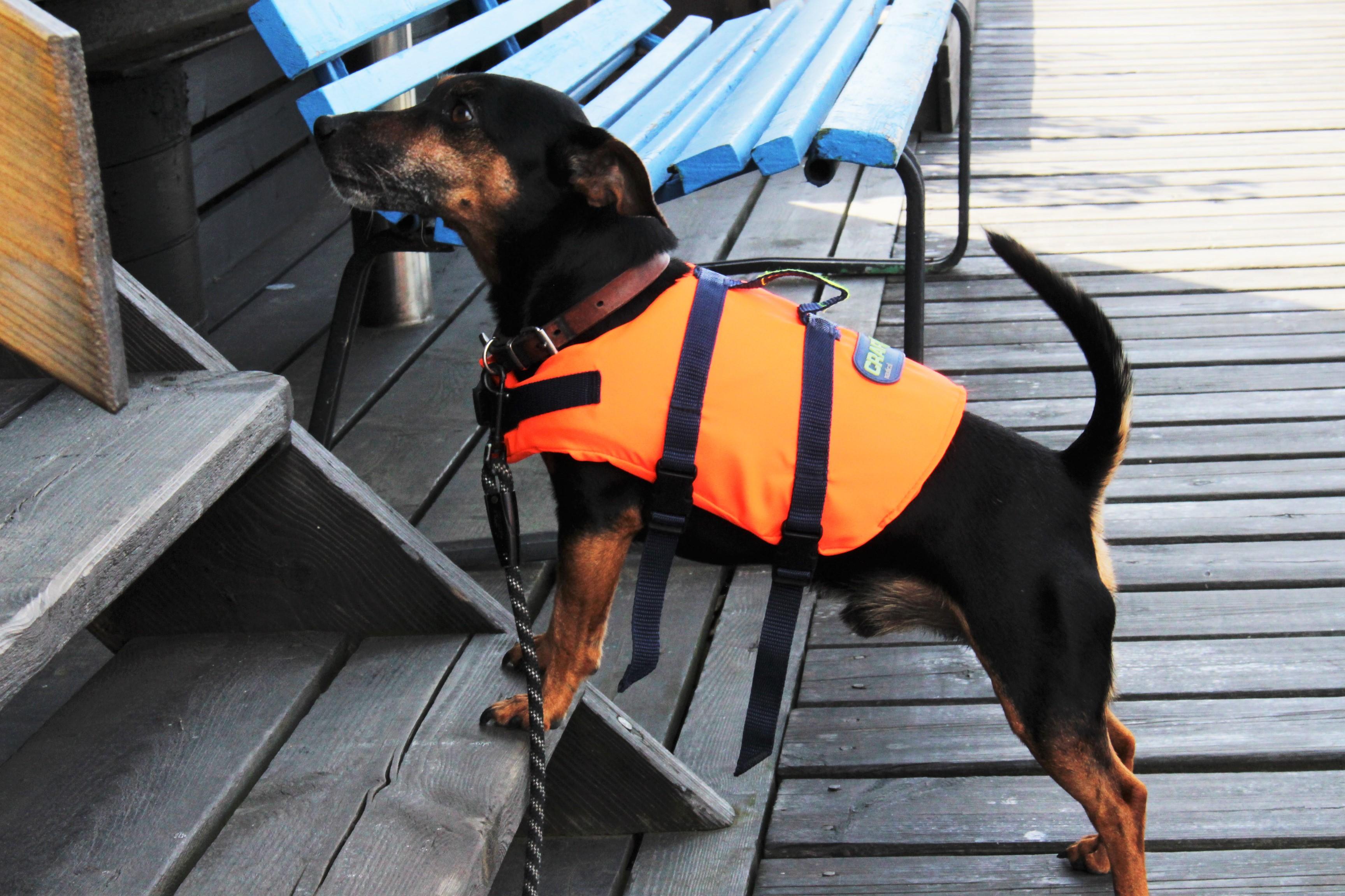 Hunden Hugo i egen flytväst