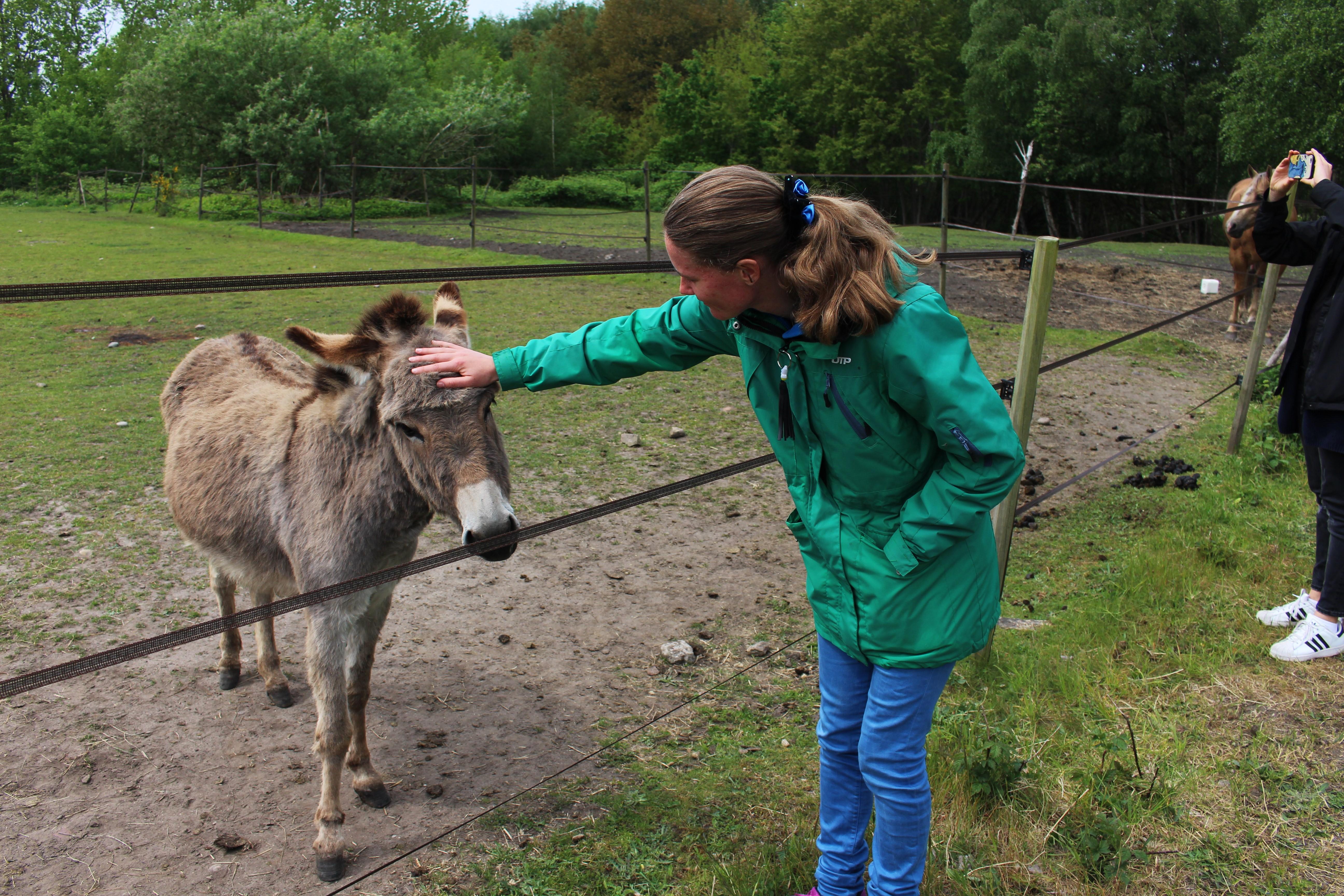 Sara klappar en åsna